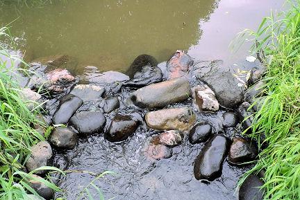 0907_蓮池の関.jpg