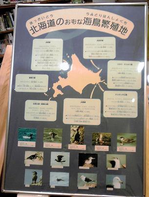 1009_北海道の海鳥繁殖地.jpg