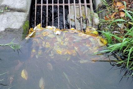 1011_草のダム.jpg