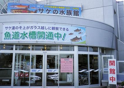 0911_サケの水族館.jpg