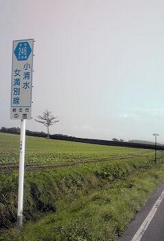 33_虚空の松.jpg
