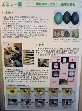 0607_笑友の卵.jpg
