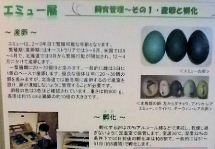 0607_笑友その卵2.jpg