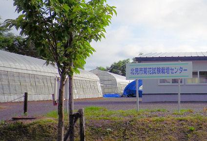 0729_北見市菊花栽培センター.jpg