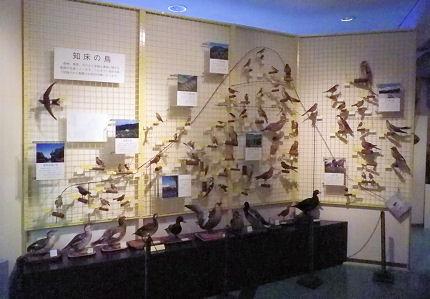 知床の鳥.jpg