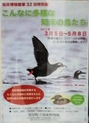 知床ポスター.jpg