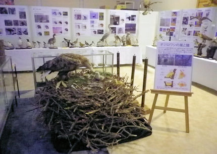 オジロワシの巣.jpg