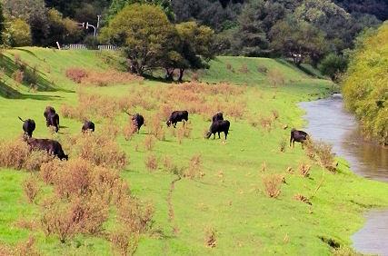 0904_黒毛和牛.jpg