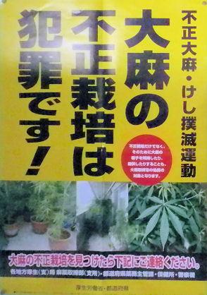 1108_大麻の不正栽培.jpg
