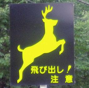 0801_シカ注意!丸瀬布.jpg