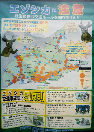 0726_蝦夷鹿に注意!.jpg