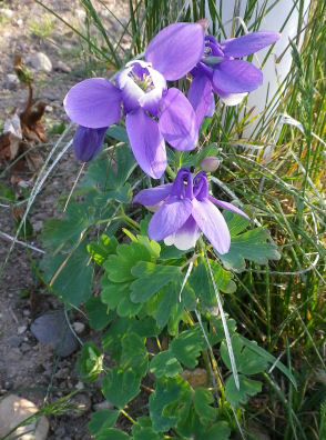 0531_紫の花.jpg