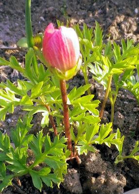 0531_小さい赤い花.jpg