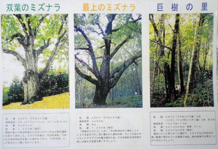 0811_津別の巨樹たち.jpg