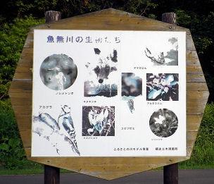 0718_魚無川の生き物.jpg