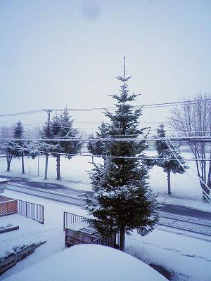 0508_なごり雪.jpg