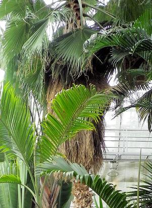 0814_アイヌ翁の樹.jpg