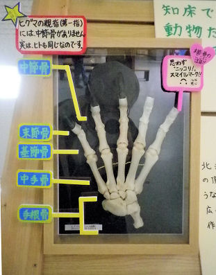 0414_ヒグマの右手.jpg