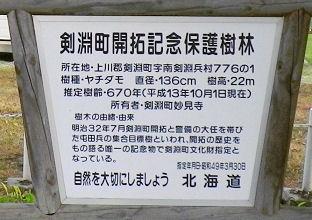 0820_剣淵ヤチダモ説明.jpg