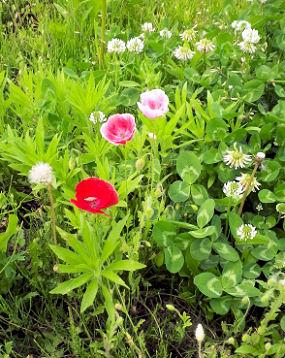0629_色んな花.jpg