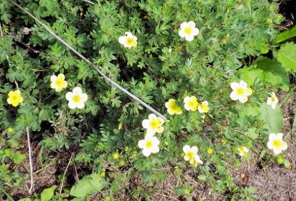 0708_黄色い花.jpg
