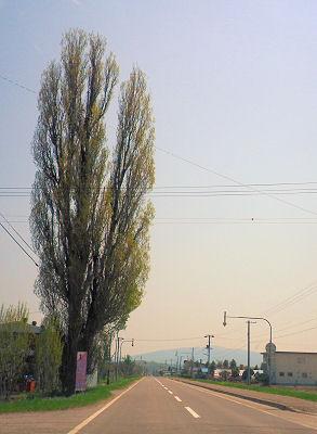0522_ポプラ&藻琴山.jpg