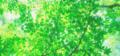 プロフィール背景 (300×140 px)
