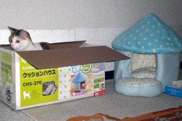 f:id:housepublishing:20121112104553j:image:w500