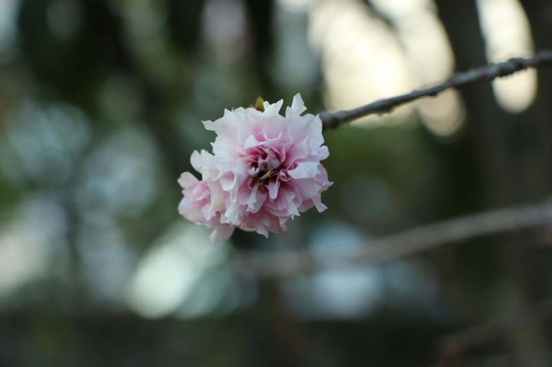 f:id:hozumi3081:20151026204931j:plain