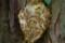 ムモンホソアシナガバチの巣