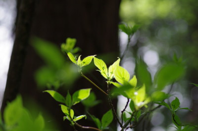 f:id:hp2:20110410100344j:image