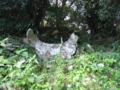 御神体石 月山神社  高知県幡多郡大月町月ヶ丘