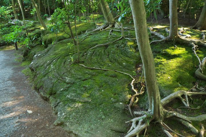 三島溶岩流1