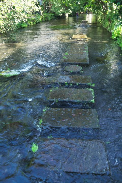 源兵衛川の飛び石