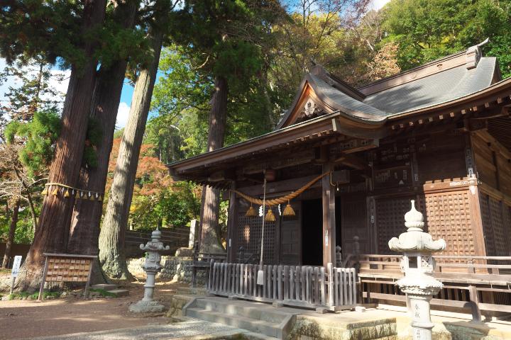 日枝神社拝殿と子宝の杉