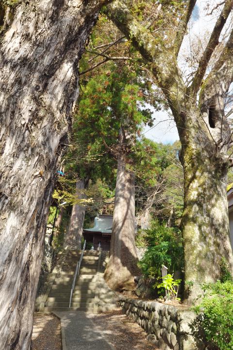 日枝神社 参道と並木