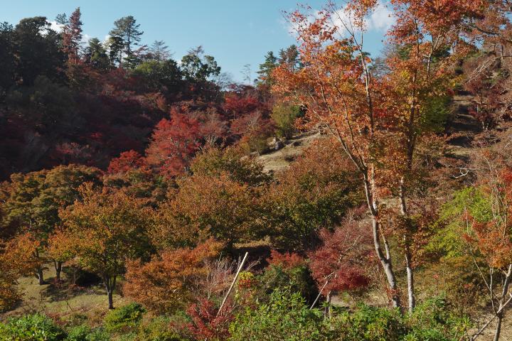 修善寺自然公園もみじ林の斜面