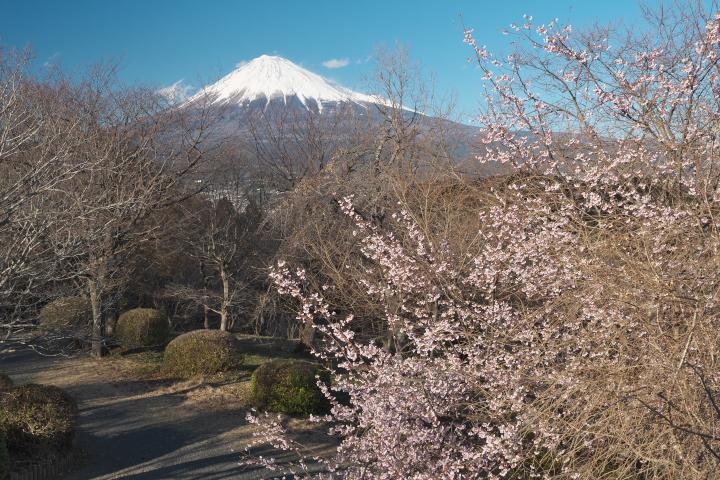 岩本山公園 山頂展望台 富士山方向