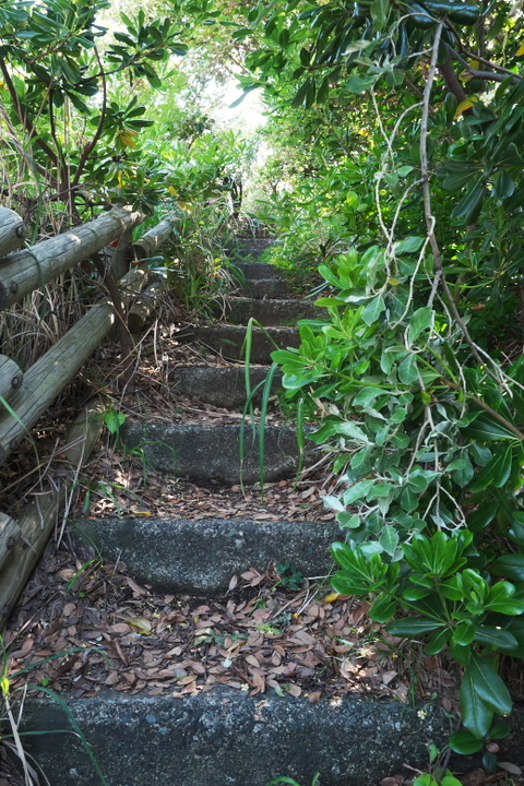 沢田公園 階段
