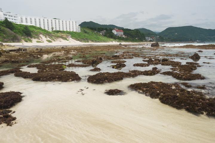 白浜中央海水浴場の磯