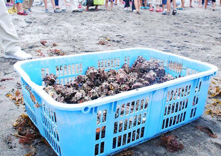 宇久須クリスタルビーチ 海の安全祈願祭