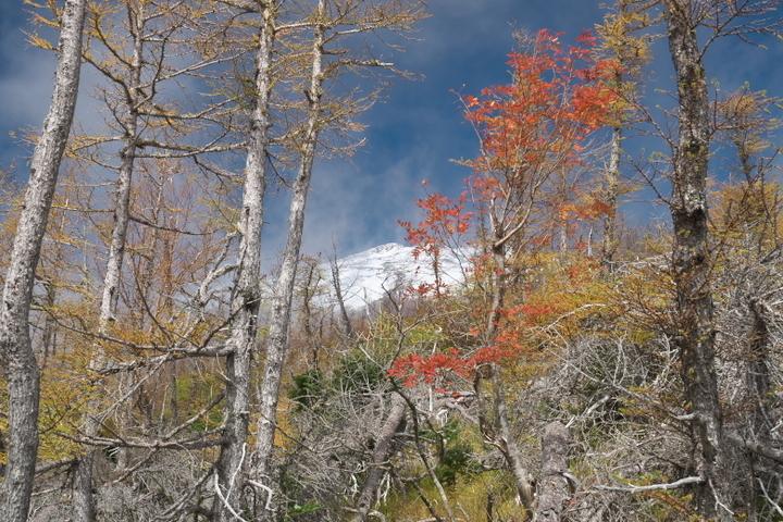 富士山自然休養林