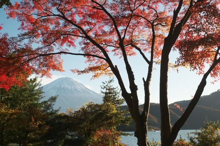もみじトンネルと富士山