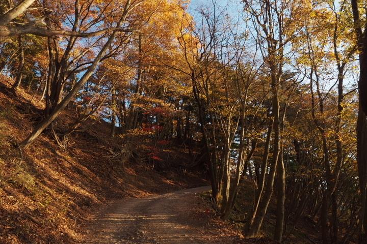 紅葉台への山道