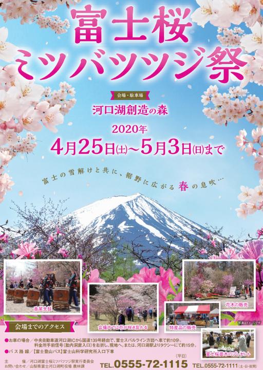 河口湖創造の森 富士桜ミツバツツジまつ