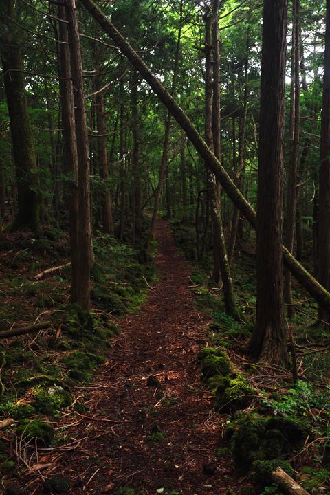 東海自然歩道2
