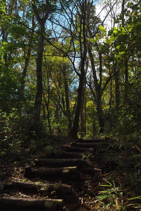 竜ヶ岳登山道 樹林地帯