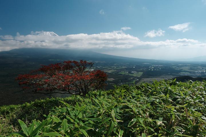 竜ヶ岳 帰路 笹原からの富士山