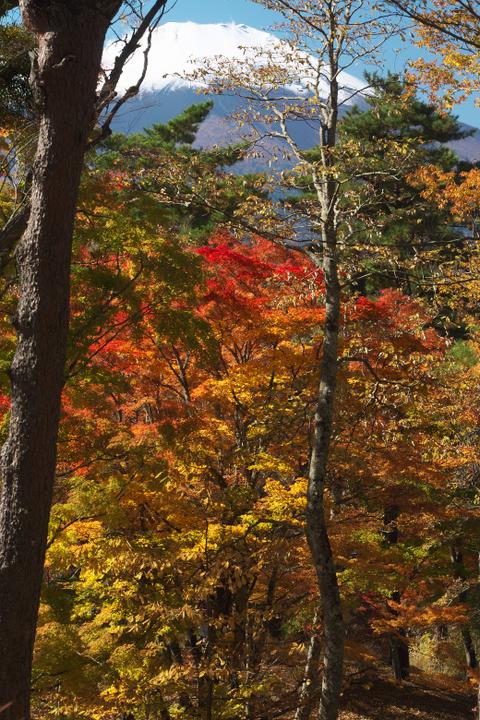山中湖夕焼けの渚附近の紅葉と富士山