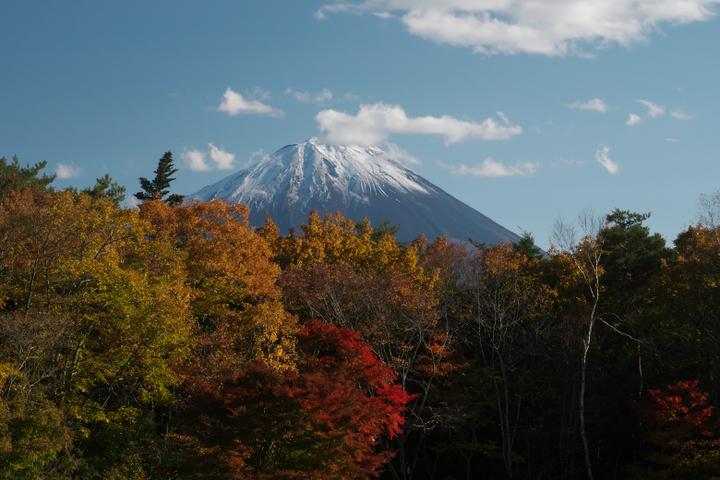 西湖 野鳥 の森公園の紅葉と富士山